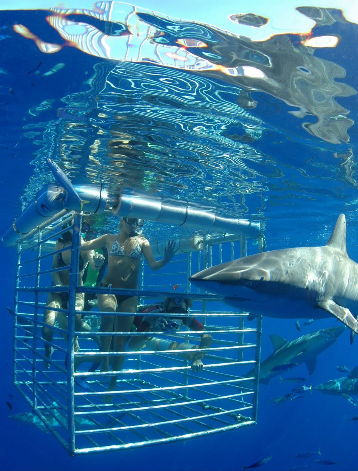 Diving_Cage_Sharks_1200x1580